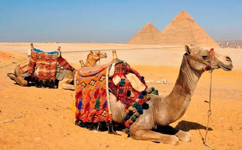 Cali4travel-Egypt Day Tour-pyramids camel
